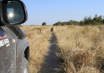 botswana_2015_07